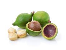 Noci di macadamia su fondo bianco Immagine Stock