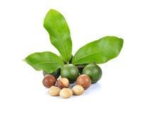 Noci di macadamia su fondo bianco Immagini Stock