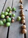 Noci di noce di macadamia Fotografia Stock