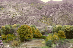 Noci ingiallite di autunno nel villaggio al piede delle montagne Fotografia Stock Libera da Diritti