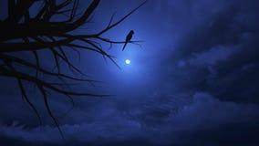 Nocne niebo na Halloween. Obrazy Stock