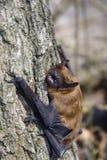 Pipistrello sull'albero fotografia stock