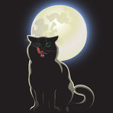 Nocturnal black cat. On black background Stock Photos