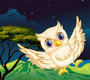 A nocturnal creature. Illustration of a nocturnal creature Stock Photos