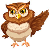 Nocturnal creature Royalty Free Stock Photos
