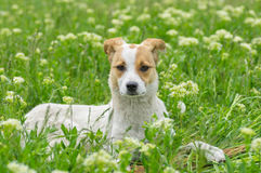 Portrait of adorable stray dog Stock Image