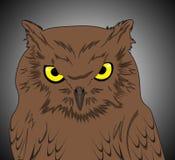 Nocturnal ptak Zdjęcie Stock