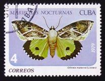 Nocturnas Mariposas бабочки Linneo materna Othreis, около 1979 Стоковые Фото