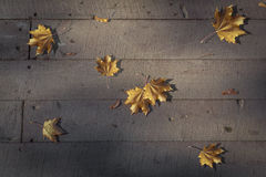 Nocturne from autumn leaves. Yellow leaves as notes on a stave formed the autumn nocturne of wooden boards Royalty Free Stock Photography