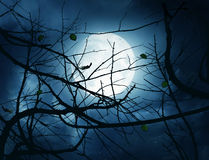 Nocturne with Full Moon and Branches Royalty Free Stock Photography