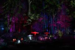 Nocy świateł przedstawienia ` inspiraci ` w Ostankino ogrodowego miasta parku Setki światła w lasowym Zadziwiającym 3d lekkim i l zdjęcia stock