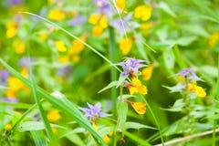 Nocy i dnia kwiatów makro- fotografia Zdjęcia Royalty Free