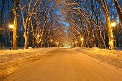Nocy iluminacja na zimy alei, władza, fotografia royalty free