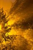 Nocy jesieni żółci drzewa Nocy mgła Obrazy Royalty Free