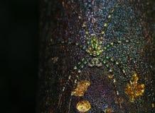 Nocy makro- fotografia Obrazy Stock