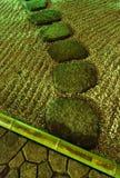 nocy ogrodniczego zen. Zdjęcia Stock