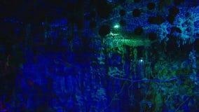 Nocy prehistoryczna dżungla magiczny noc las zbiory