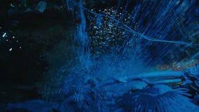 Nocy prehistoryczna dżungla magiczny noc las zdjęcie wideo