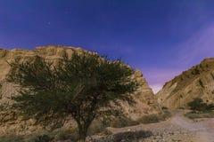 Nocy pustynia Zdjęcie Stock