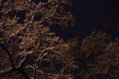 Nocy tła śnieżne gałąź obrazy royalty free