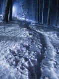 Nocy zimy las Zdjęcia Royalty Free