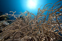 Noded coral Stock Image