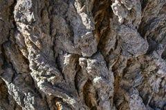 Nodi e nodi di vecchio albero di Wisened fotografia stock libera da diritti