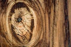 Nodo di legno Fotografie Stock