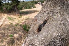 Nodo grande en tocón de árbol viejo en el paisaje Fotos de archivo