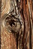 Nodo nella vecchia corteccia di albero stracciata Fotografia Stock Libera da Diritti