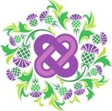 Noeud celtique entouré par le chardon de fleurs Images stock