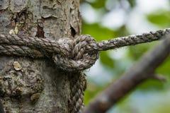 Noeud de corde à l'arbre Photo stock