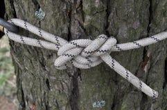 Noeud de corde ou de corde pour le sport et le repos Image libre de droits