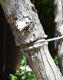 Noeud de Strangeling Photo libre de droits