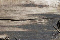 Noeud en bois rustique images libres de droits
