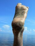 noga Zdjęcie Stock