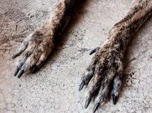 Noga pies Zdjęcia Stock