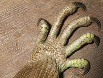 Noga zielona iguana Obraz Royalty Free