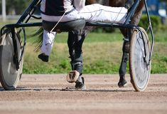 Nogi brązu kłusaka koń końska nicielnica i Nicielnica wyścigi konny w szczegółach obraz royalty free
