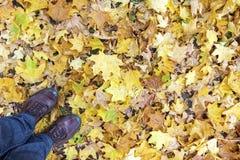 Nogi i buty przeciw liścia klonowego tłu zdjęcia stock