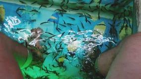 Nogi i małe ryba zbiory