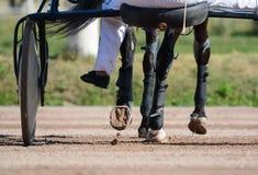 Nogi kłusaka koń końska nicielnica i Nicielnica wyścigi konny w szczegółach obraz royalty free