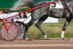 Nogi szary kłusaka koń końska nicielnica i Nicielnica wyścigi konny w szczegółach obraz royalty free