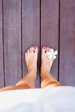 nogi tropikalnego fotografia stock