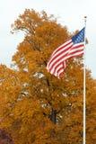 Noi bandierina davanti ad un albero Fotografie Stock Libere da Diritti