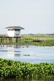 noi rezerwowi thale waterfowl Fotografia Royalty Free
