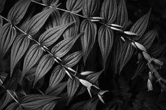 Noir Photo stock
