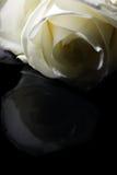 noir au blanc Photographie stock