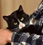 noir avec le chat blanc sur des mains Images stock