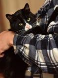 noir avec le chat blanc sur des mains Image stock